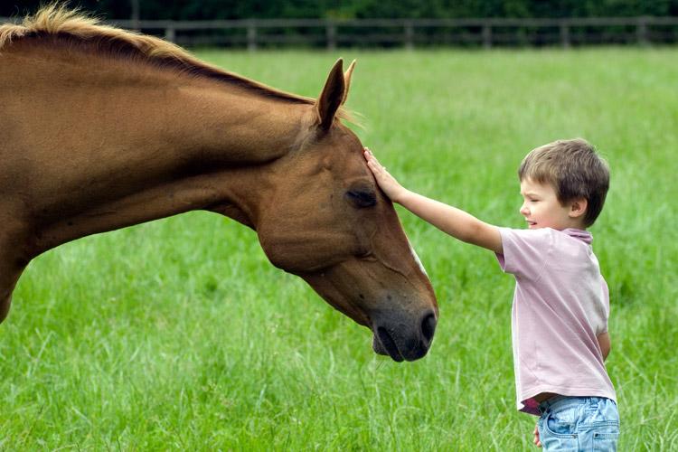 Boy pets gentle horse